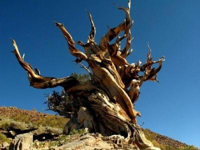 """生命极限是多少?20万年?不,这种生物可以""""永生"""""""